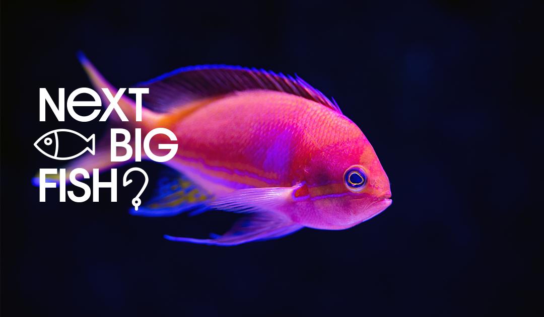 Next Big Fish?